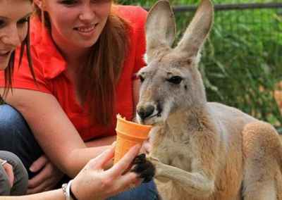 ice-cream-kangaroo